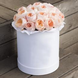25 пионовидных роз в белой коробке